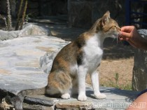 cat-feeding