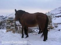 mule-snow
